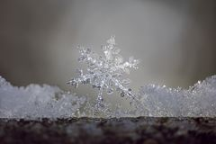 Snowflake Branch. Snowflake between melting ice on a branch in the forest Royalty Free Stock Photo