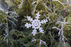 Snowflake on the branches. Silver snowflake knitted from threads on the frozen branches of spruce and fir Stock Images
