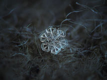 Snowflake on dark gray wool background. This is macro photo of real snow crystal: small specimen with short, broad arms and almost perfect symmetry stock photo