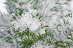 Snowflake on fir branches Stock Photography