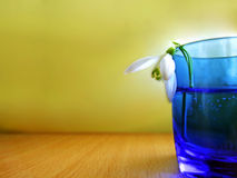 Snowflake in glass. Dying snowflake in blue glass stock photo