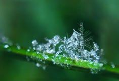 Snowflake like green christmass tree melting stock images
