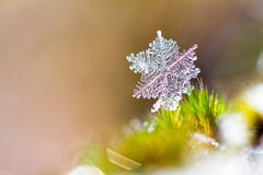 Snowflake macro Royalty Free Stock Photo