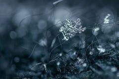 Snowflake. Macro shot of snowflake with background Royalty Free Stock Image