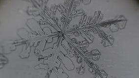 Snowflake melts on light gray background stock video