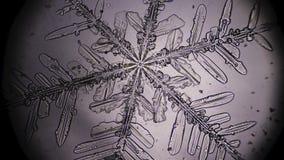 Snowflake in microscope. Rack focusing stock footage