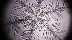 Snowflake in microscope. Rack focusing stock video