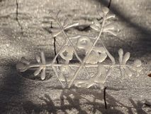Snowflake. In the picture is one snowflake in the snow Stock Image