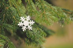 Snowflake on a pine branch Royalty Free Stock Photos