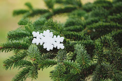 Snowflake on a pine branch Royalty Free Stock Images