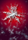 Snowflake on a red background Royalty Free Stock Image