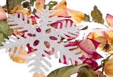 Snowflake and roses Royalty Free Stock Photos