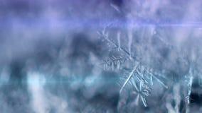 Snowflake on a snow stock footage