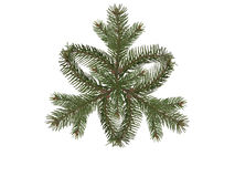 Snowflake spruce branch Stock Image