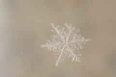 Snowflake. Tiny Snowflake with white background Stock Images