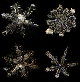 Snowflake under a microscope Royalty Free Stock Image