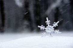 Snowflake. In a white snow Stock Images