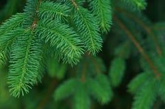 snowflakes έλατου Χριστουγέννων ανασκόπησης μπλε σκοτεινό darkly δέντρο Στοκ φωτογραφία με δικαίωμα ελεύθερης χρήσης