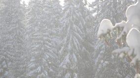 Πτώσεις χιονιού μπροστά από το φως του ήλιου Snowflakes στα δασικά χιονισμένα δέντρα πεύκων στο βουνό κατά τη διάρκεια του χειμών απόθεμα βίντεο