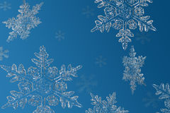 Snowflakes. Floating on a blue background Royalty Free Stock Photos