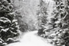 Snowflakes against winter forest. Stock Photo