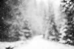 Snowflakes against winter forest. Royalty Free Stock Image