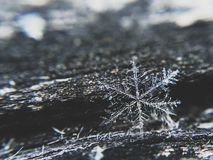 Snowflakes on Black Wood Brunch Selective Focus Photography Royalty Free Stock Image