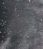 Snowflakes close-up on fur. Winter coat of the beast. Fluffy fur in snowflakes stock images