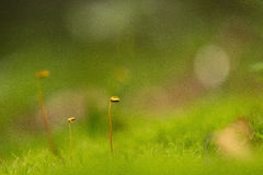 Grass sprouts Stock Images