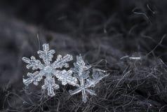 Snowflakes closeup Stock Image