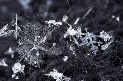 Snowflakes closeup Royalty Free Stock Photography