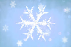 Snowflakes crystal. Beautiful snowflakes crystal on the neon background Stock Images