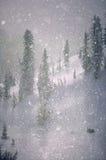 Snowflakes Crystalized που πέφτουν ενώ όντας αναδρομικά φωτισμένος από τον ήλιο. Στοκ Φωτογραφία
