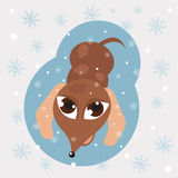 Snowflakes and dog Stock Images