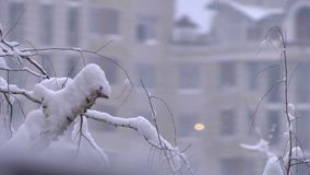 Snowflakes falling in city snowstorm at trees branches. Building in the background.  stock video footage