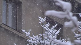 Snowflakes falling in city snowstorm at trees branches. Snowflakes falling in city snowstorm at trees branches stock video footage