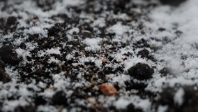 Snowflakes falling on the dark ground, handheld camera stock footage
