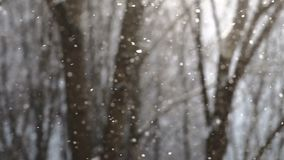 Snowflakes falling in slow motion with trees on the background. Beautiful slow motion shot of big snowflakes flying in the air with trees on the blurred stock footage