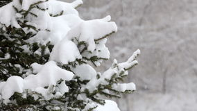 Snowflakes falling, snowfall. Scenic winter landscape. Trees and snow. Snowflakes falling, snowfall. Scenic winter landscape. Tree branches and snow in forest or stock video