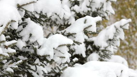 Snowflakes falling, snowfall. Scenic winter landscape. Trees and snow. Snowflakes falling, snowfall. Scenic winter landscape. Tree branches and snow in forest or stock footage