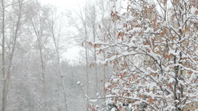 Snowflakes falling, snowfall. Scenic winter landscape. Trees and snow. Snowflakes falling, snowfall. Scenic winter landscape. Tree branches and snow in forest or stock video footage