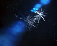 Snowflakes family flying through universe Stock Photography