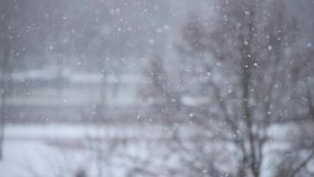 Snowflakes float up and down. Snowflakes and snow dust float up and down with a park (blurry) in the background. Close up, shallow depth of field, low contrast stock video footage
