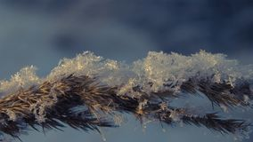 Snowflakes on the grass at sunset on a winter afternoon Stock Photography