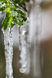 Snowflakes in icicle. Snowflakes frozen in an icicle attached to bushes in winter Royalty Free Stock Photo