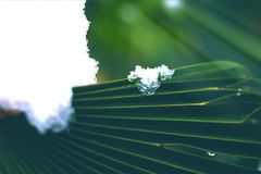 Snowflakes on palm leaf close up stock images