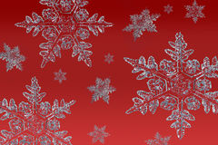 Snowflakes on red. Cluster of snowflakes on a red background Stock Images