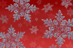 Snowflakes on red. Cluster of snowflakes on a red background Stock Photography
