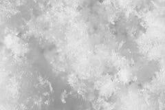 snowflakes supermakrosommar för 2009 blomma Royaltyfri Foto