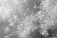 snowflakes supermakrosommar för 2009 blomma Royaltyfria Foton